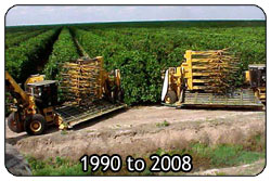 Mechanical Harvesting: 1990 to 2008