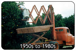 Mechanical Harvesting: 1950s to 1980s